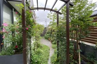 バラのパーゴラ。フェンス一面にバラ咲くガーデニングを楽しむ庭