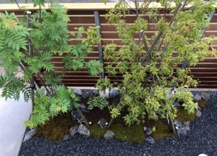 新潟市秋葉区「北上の家」植栽工事