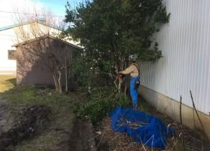 まるで春の陽気でしたね。樹木の伐採作業や雑草対策の防草シートの布設など行いました。