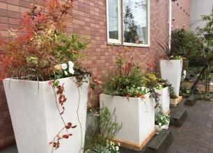 秋の寄せ植え&花壇づくり