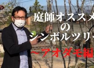 新潟のお庭造り 庭師オススメのシンボルツリー ~アオダモ編~