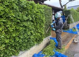 生垣の刈り込み剪定のご紹介です!