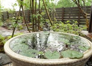 睡蓮鉢 身近な自然を楽しむビオトープ