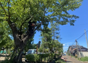 高木枝下し剪定