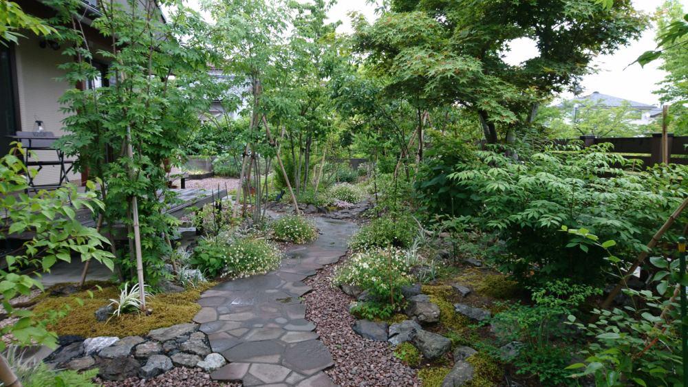 雑木と石貼りのアプローチが視線を奥へと導きます。 デッキ前の植栽き落葉樹のナナカマド、アオダモ。 足元にはアジサイや宿根草を。