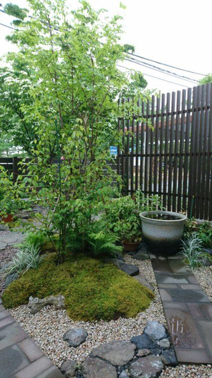 和室前の坪庭。鉄平石の方形石貼りのアプローチ。水鉢は信楽焼。信楽焼の水鉢にはスイレン(ヒメスイレン・ヒツジグサ)を浮かべて