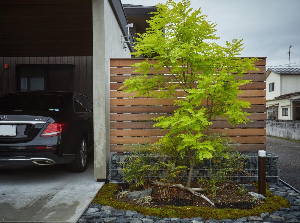 ガレージ脇の植栽 ハードウッドフェンスをバックにした額庭 ニセアカシアフリーシアと細葉ヒイラギナンテン