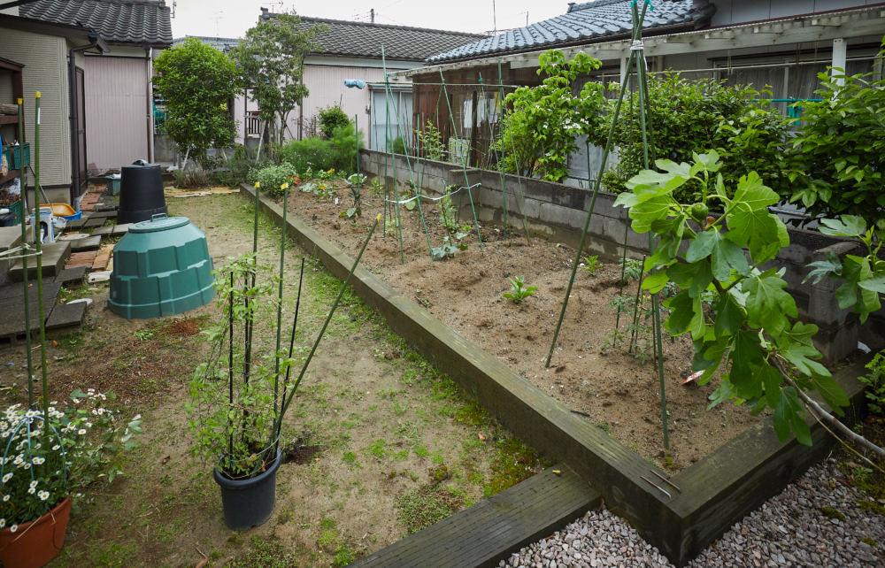家庭菜園 奥には目隠し替わりのシラカシ、キンモクセイを植栽。
