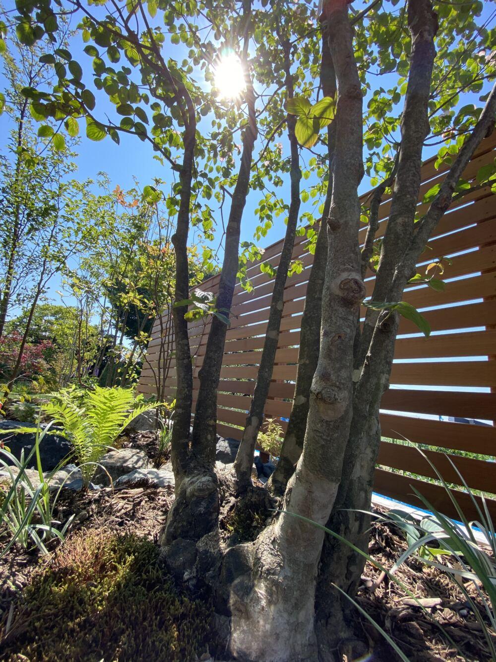 木漏れ日の美しい雑木の庭